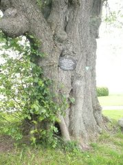 Kalter Baum