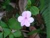 taiwanesische_flora_1