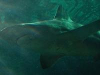 Glücklicherweise befindet sich eine Scheibe zwischen dem Hai und mir