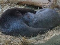 Das Otterpärchen schläft den Schlaf der Gerechten