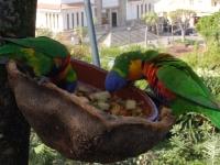 Papageien ganz nah - aber auf einer sehr schwankenden Hängebrücke!