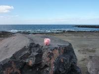 Margret darf auch Strandluft schnuppern