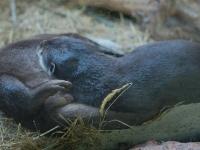 Und die Otter pennen immer noch