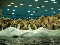 Im Pinguin-Haus