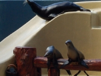 Seelöwenshow